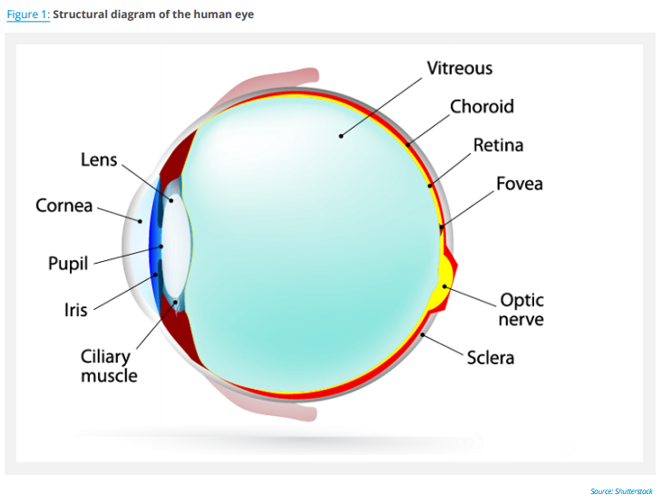 retinal_disorders_fig1